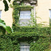 Vined Window_2683