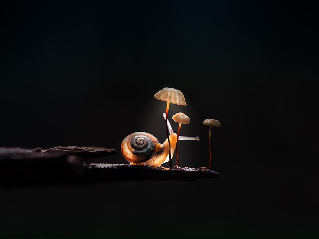 could these tiny mushrooms be reading lamps for snails?