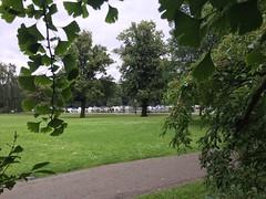 Ginkgo - Stockholm