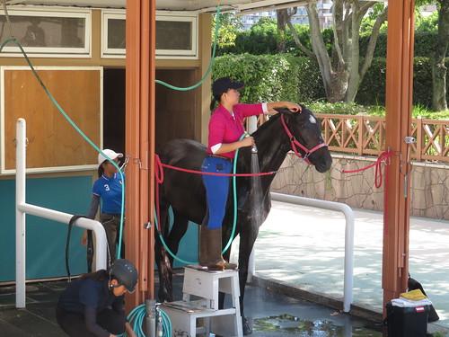 小倉競馬場の乗馬センターの馬房で体を洗われるメイショウドンタク