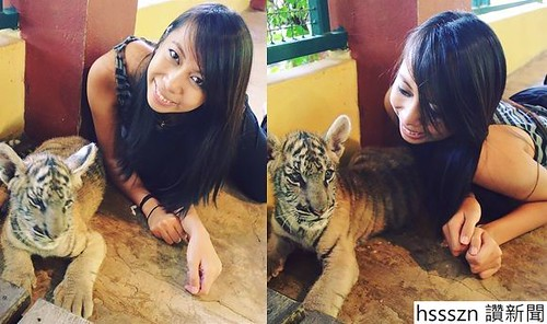 i-am-aileen-adalid-tiger-kingdom-thailand-chiang-mai-small-cats-cute_580_343