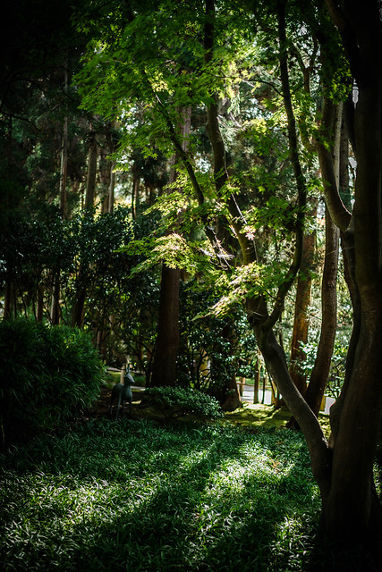 Forest, Sony ILCE-7M2, Sony FE 35mm F1.4 ZA