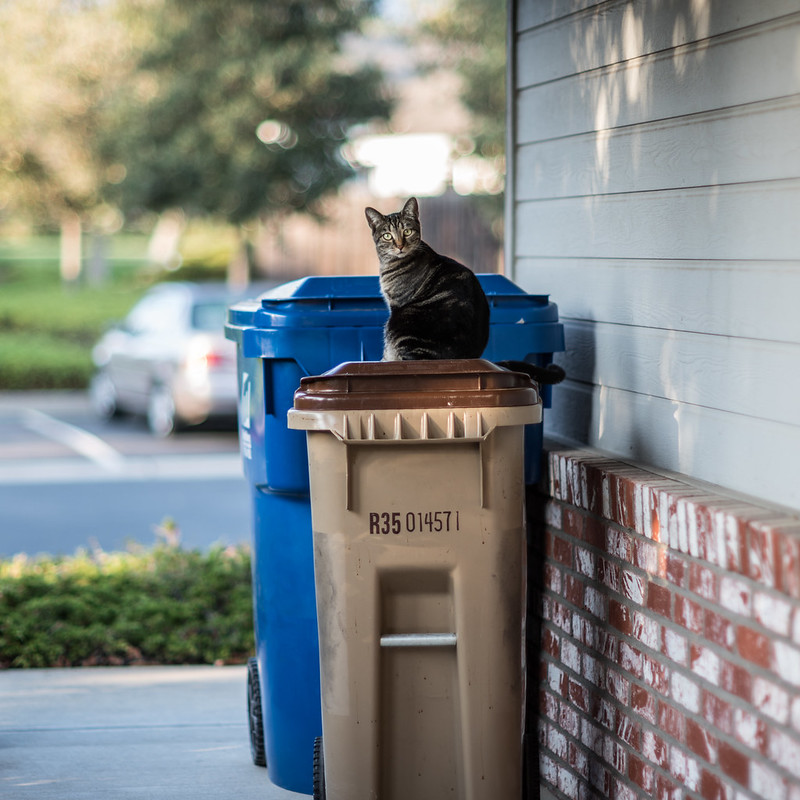 My cat plots her escape on a garbage truck