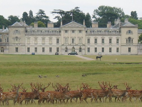 deer and private residence, woburn park
