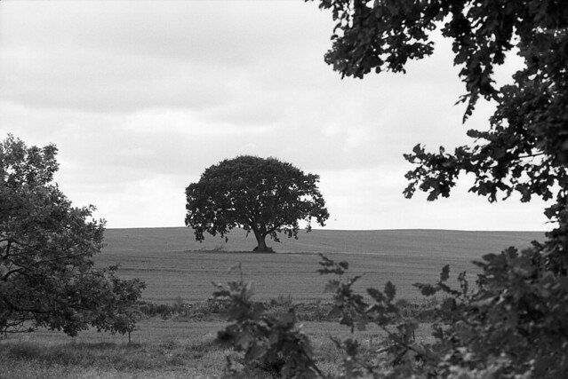 Rudolph Tegners skulpturpark: Træ på marken