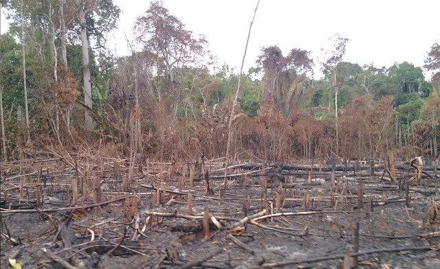 photo of deforestation in Colombia