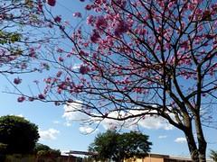 AquiCGB 160618 028 BR 262 Aquidauana Campo Grande Ipes