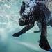 31/52 Nemo by - Una -