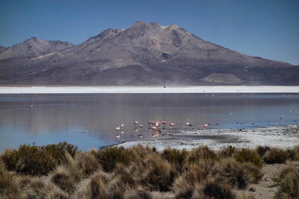 Salar de Surire - Flamingos 2