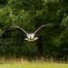 International Birds of Prey Centre (20)