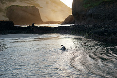Wild baby seal ... Treasures of New Zealand ✨