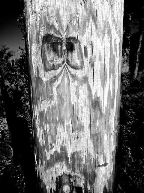 annoyed telephone pole