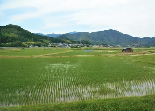 jp-uwajima-kubokawa (10)