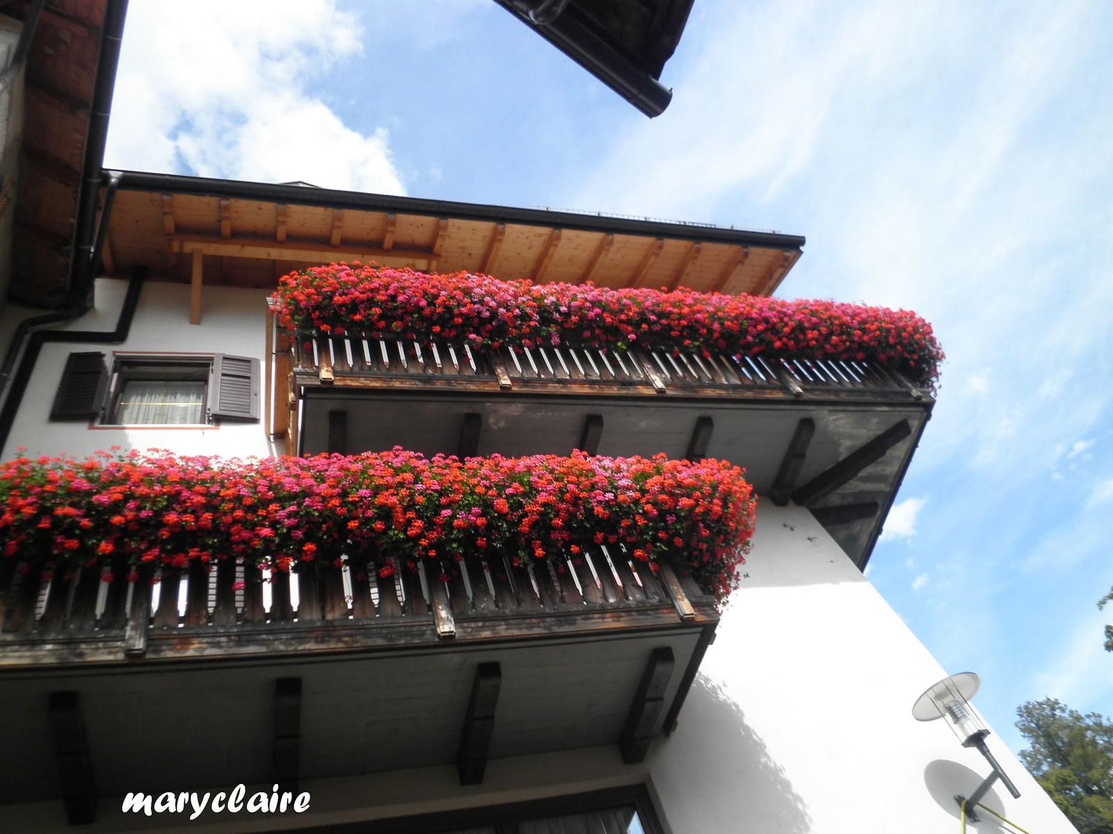 fiori di montagna3