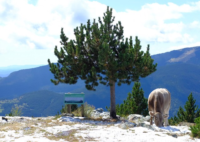 Ruta de l'Isard i de les marmotes