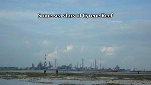 Some sea stars of Cyrene Reef