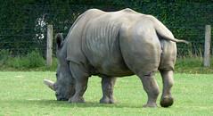 Cerza Zoo - rhinoceros