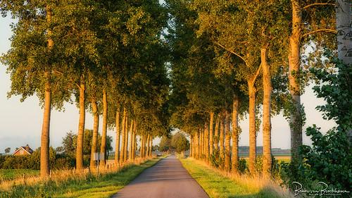 """Country road """"Kraaijenissedijk"""""""