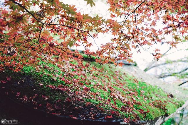 十年,京都四季 | 卷二 | 年月輪轉 | 14