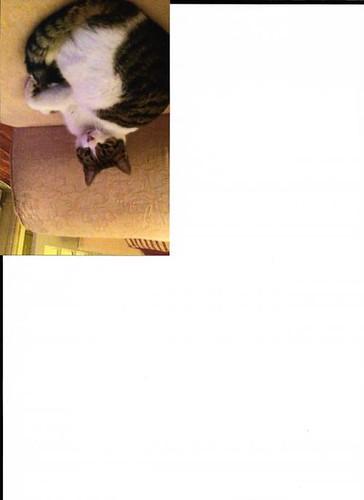 Tue, Aug 22nd, 2017 Found Female Cat - R410, Kildare