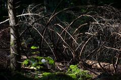 closer - into a green forest IX