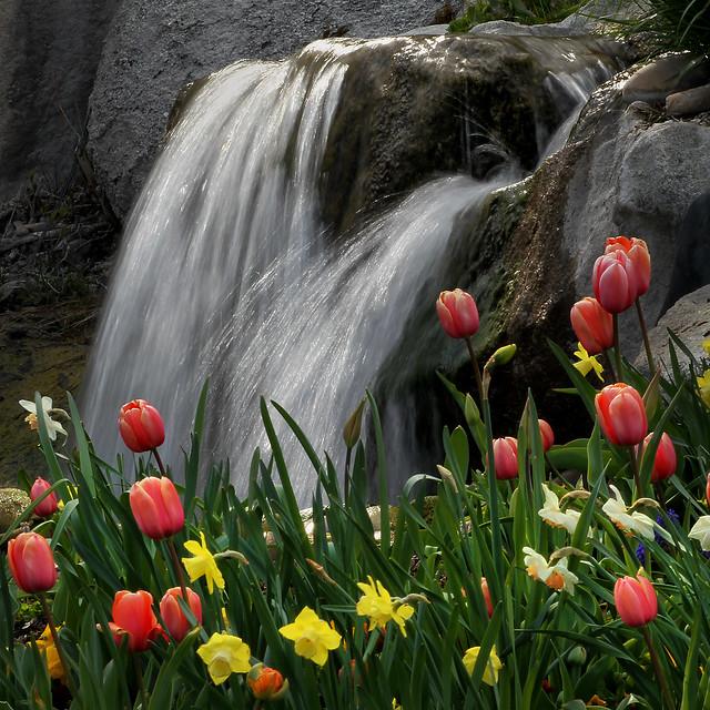 Tulip Tumble