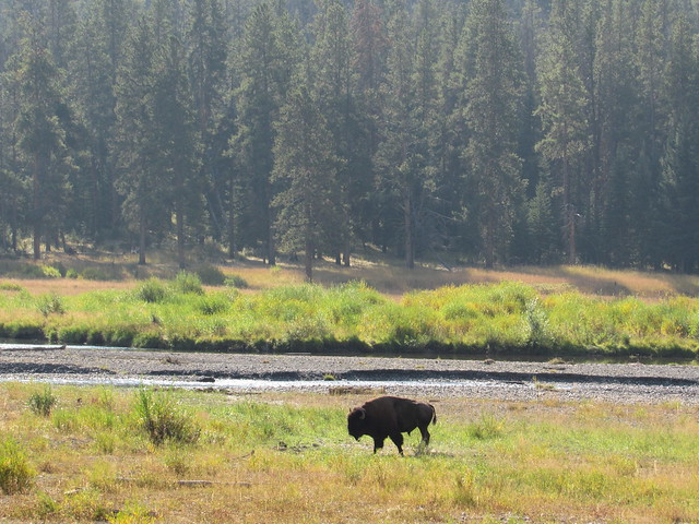 091217 Yellowstone (25)