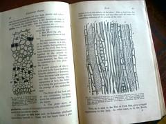 Challenge Friday, week 35, theme column (2) - Columns in a plant stem