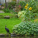 A cormorant at the bottom of the garden