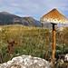 http://www.famedisud.it/autunno-sul-pollino-magico-regno-dei-funghi/ by NATURAL CALABRIA