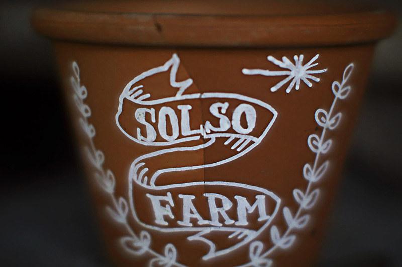 Solos Farm探訪記
