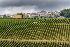 Sancerre et les vignes à perte de vue