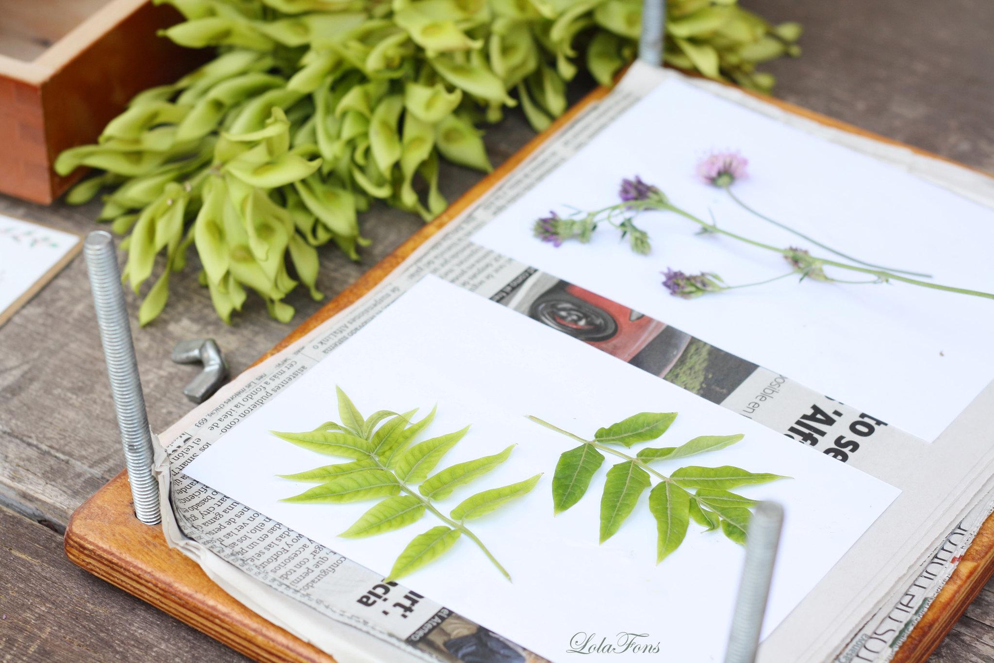 herbarium02