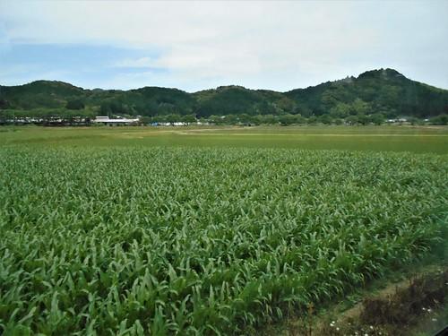 jp-uwajima-kubokawa (8)