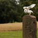 International Birds of Prey Centre (34)