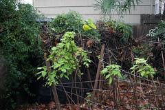 Yard and Garden Nov. '16-4556.jpg