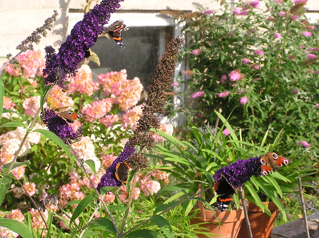Bee&Butterly Bed