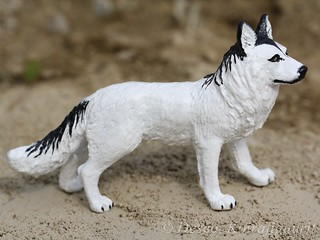 Mixed wolf dog