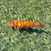 Goldfish by Pieter Musterd