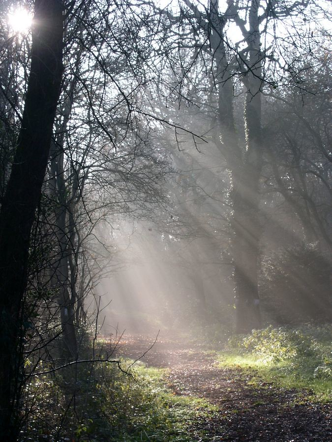 Sunlight on Coulsdon Common