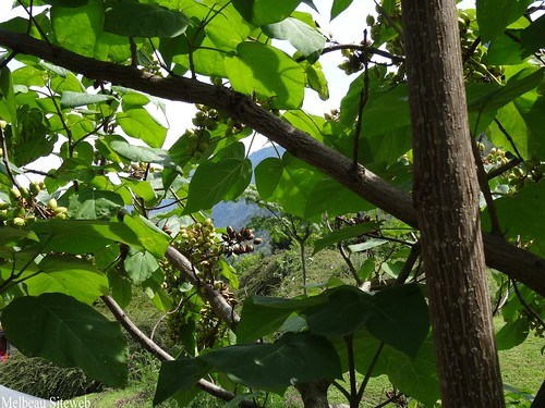 Martigny : Le berceau de montagne