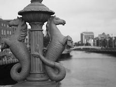 The Sea horses of Gratten Bridge Dublin in Mono