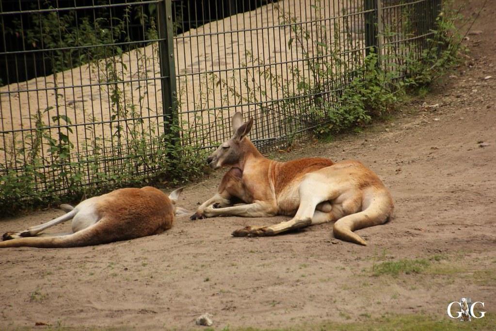 Besuch Zoo Berlin 13.08.17152
