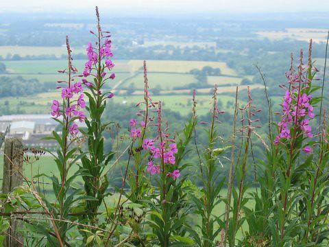 30 viewthroughflowers