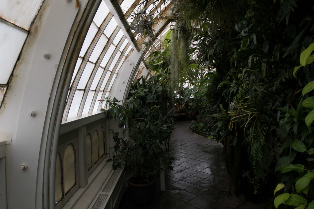 Inside San Francisco Botanical Garden