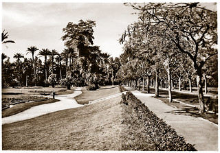 May 1942 - Avenue De Lesseps in magnificent French Gardens, Ismailia, Egypt - real photo card (circa 1930s)