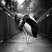 Balance by Sabrou Yves Photograff