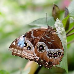 Butterfly Exhibit, Como Park