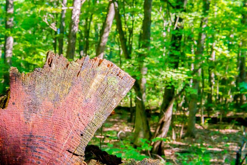 Barker Woods Nature Preserve - July 25, 2017
