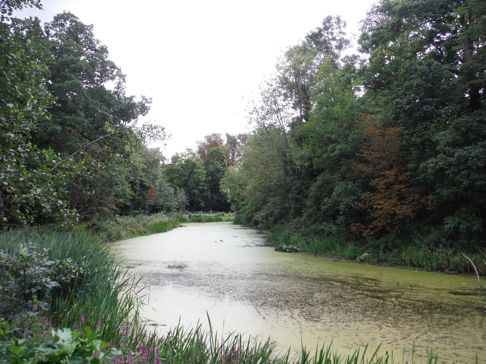 Ornamental Lake Sidearm SWC Walk Short 11 - Wanstead Park